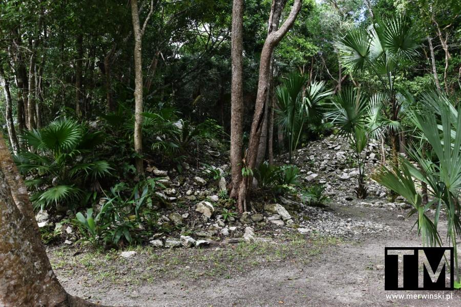 Majański gruz w dżungli
