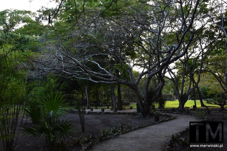 Ścieżka w strefie archeologicznej Muyil