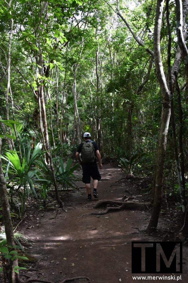 Tomasz Merwiński w dżungli na Jukatanie