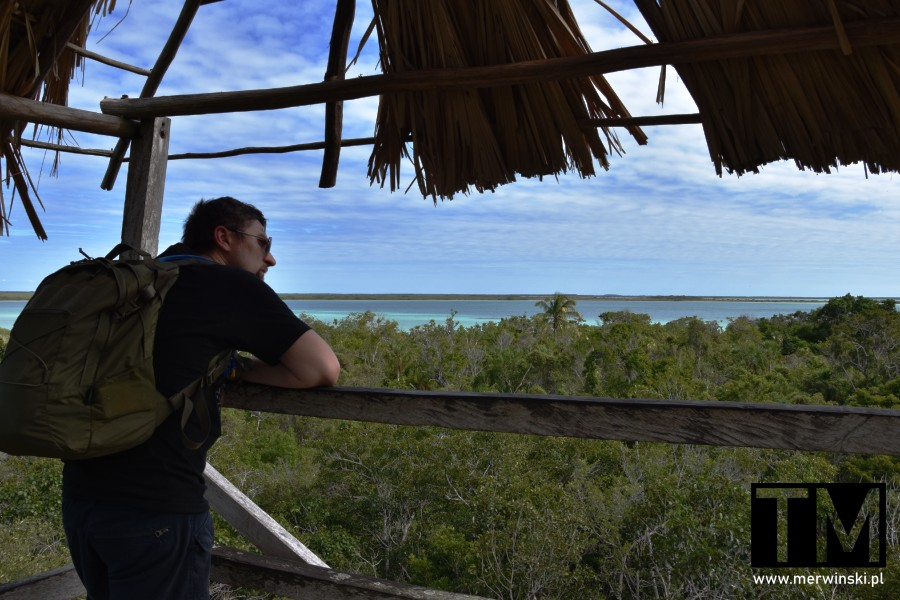 Tomasz Merwiński oglądający dżunglę z wieży widokowej