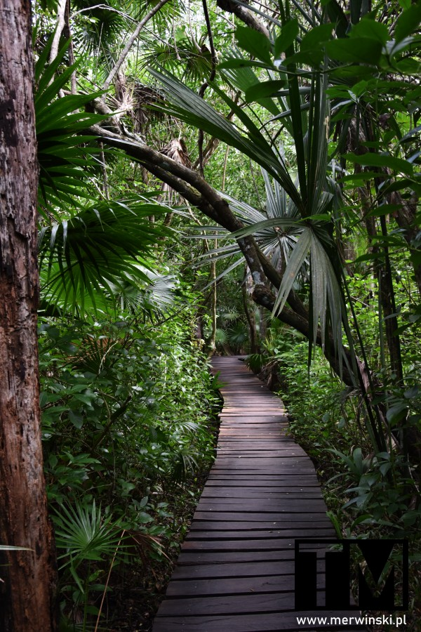 Drewniane przejście w dżungli w Meksyku