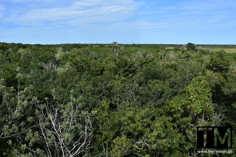 Dżungla na Jukatanie widziana z góry