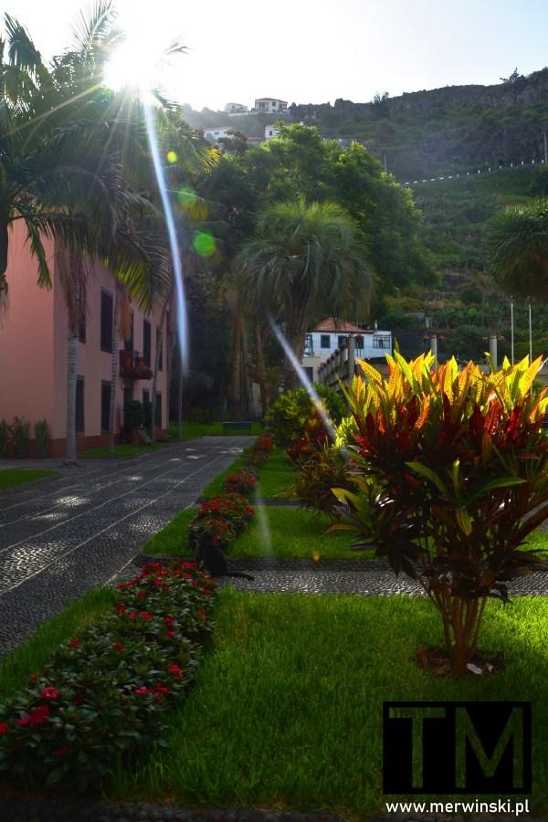 Roślinność na terenie miejscowości Ribeira Brava na Maderze