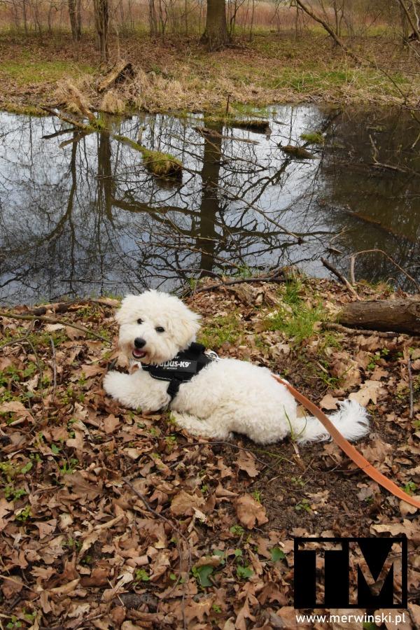 Pies nad rzeką w Okulicach