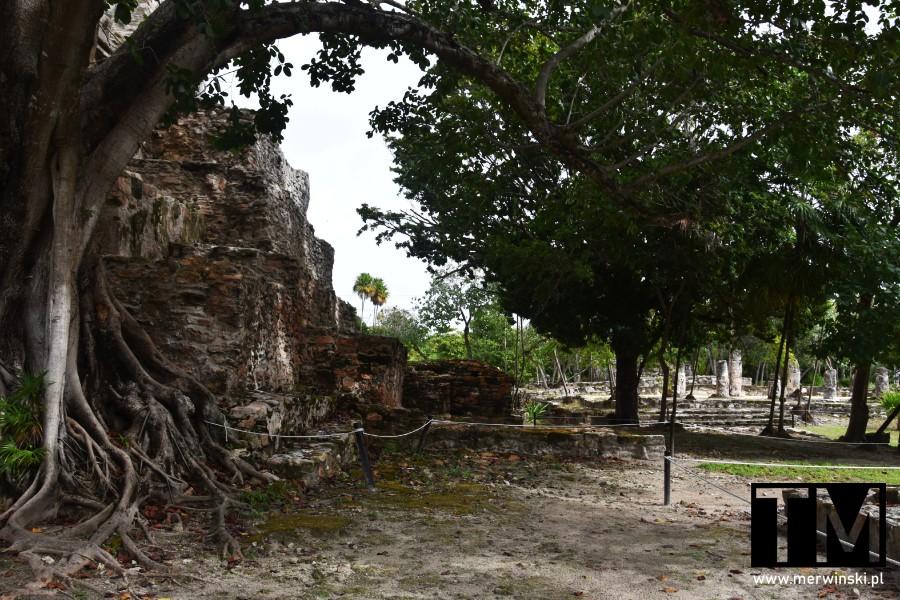 Drzewo i ruiny majańskiej miejscowości na Jukatanie
