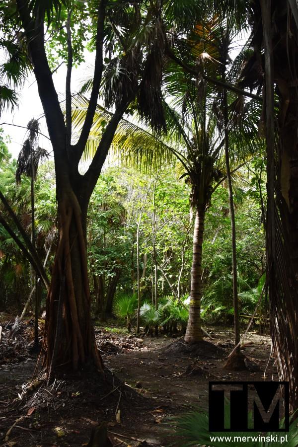 Roślinność na Jukatanie, Meksyk