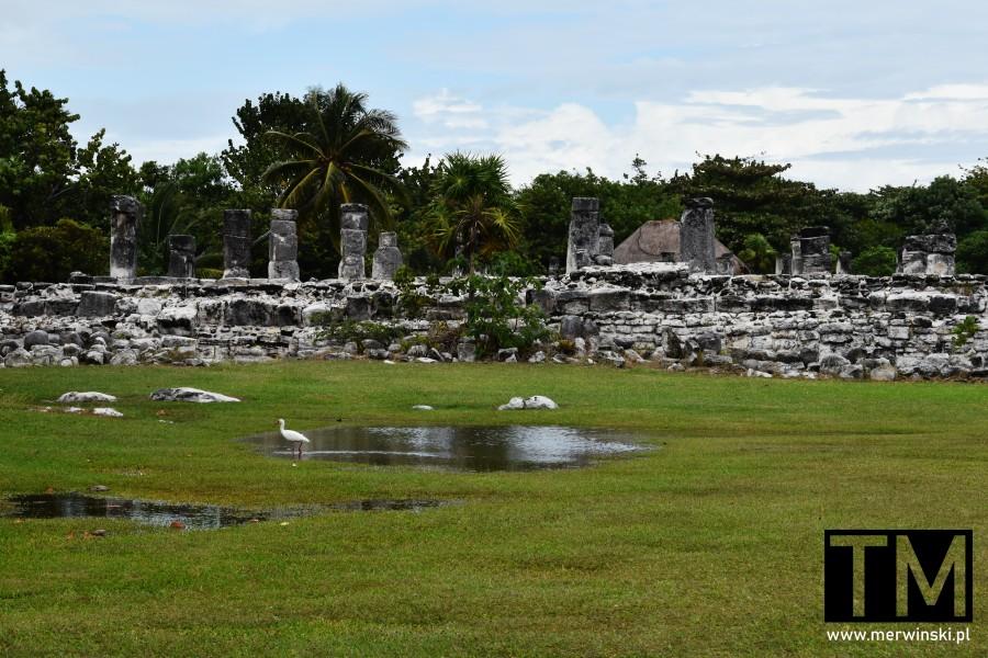 El Rey - strefa archeologiczna w Cancún