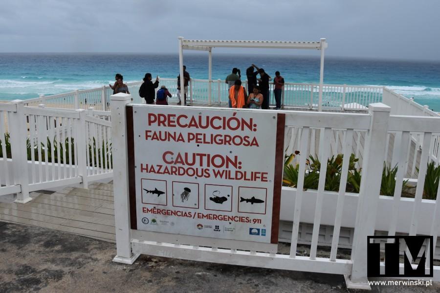 Tablica z niebezpiecznymi zwierzętami w Cancún
