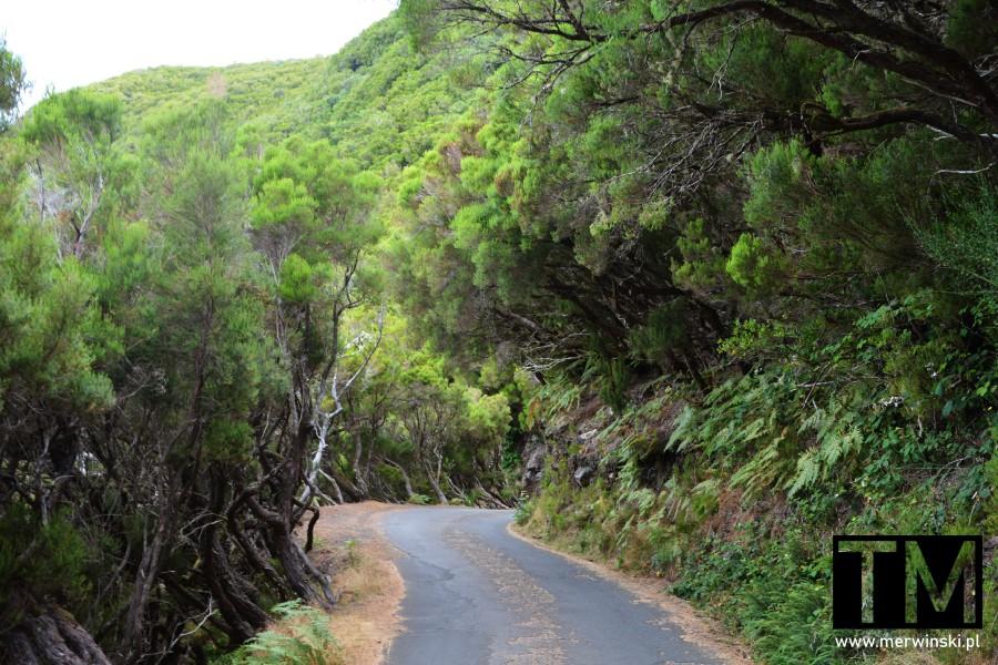 Kręta droga prowadząca na lewady - Risco i 25 źródeł