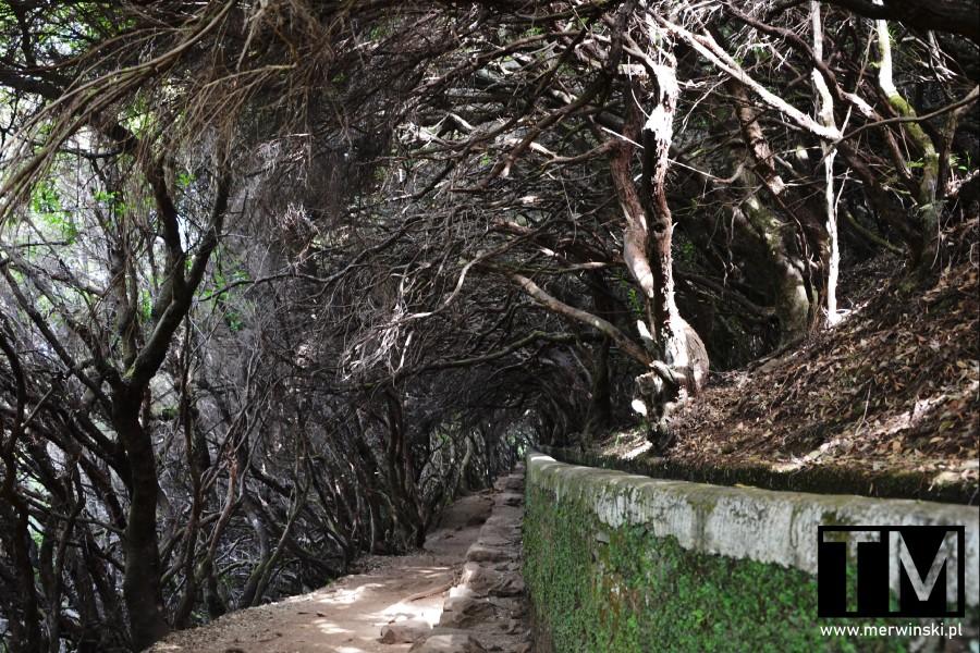 Maderski szlak otoczony drzewami
