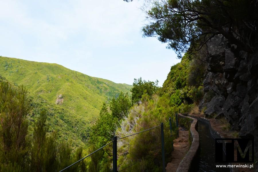 Wąski szlak obok lewady na portugalskiej Maderze