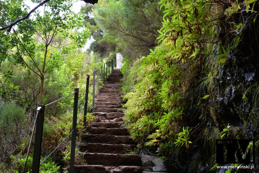 Schody prowadzące wzdłuż lewady na Maderze