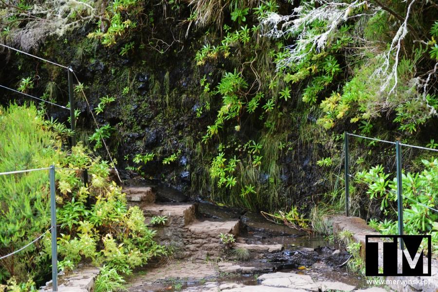 Schody przy szlaku na Maderze