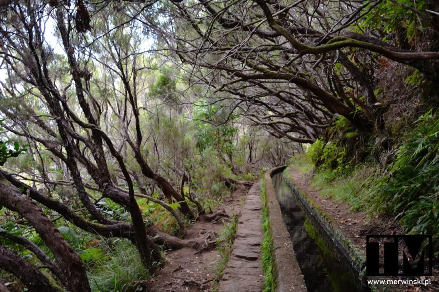 Lewada prowadząca do 25 fontes na Maderze