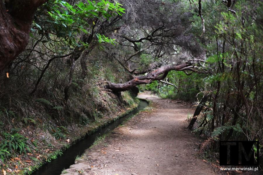 Szeroki szlak prowadzący do wodospadu Risco