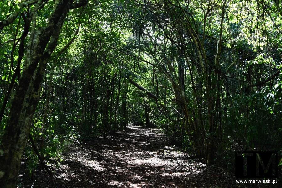 Ścieżka w dżungli na Jukatanie w Sayil