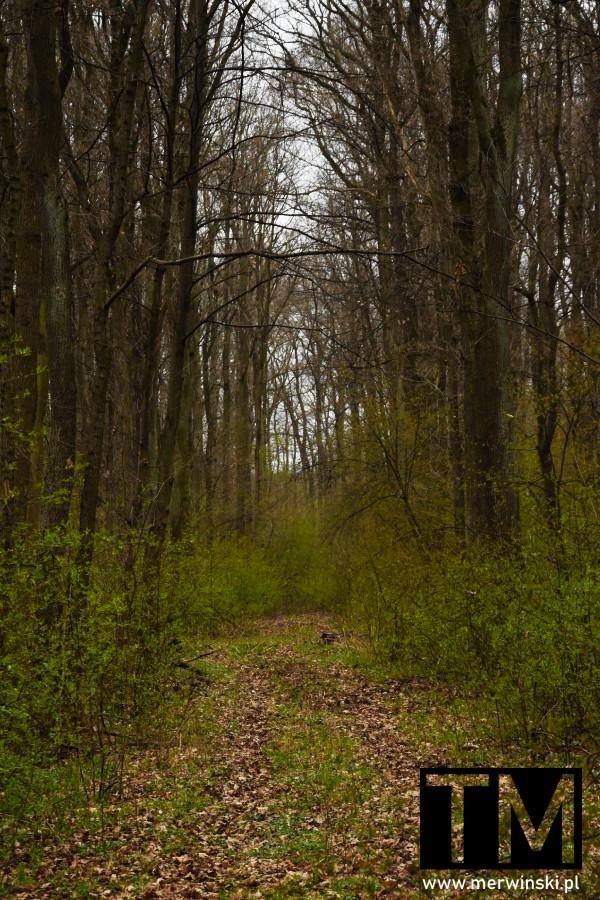 Droga niknąca w lesie w Dolinie Bystrzycy