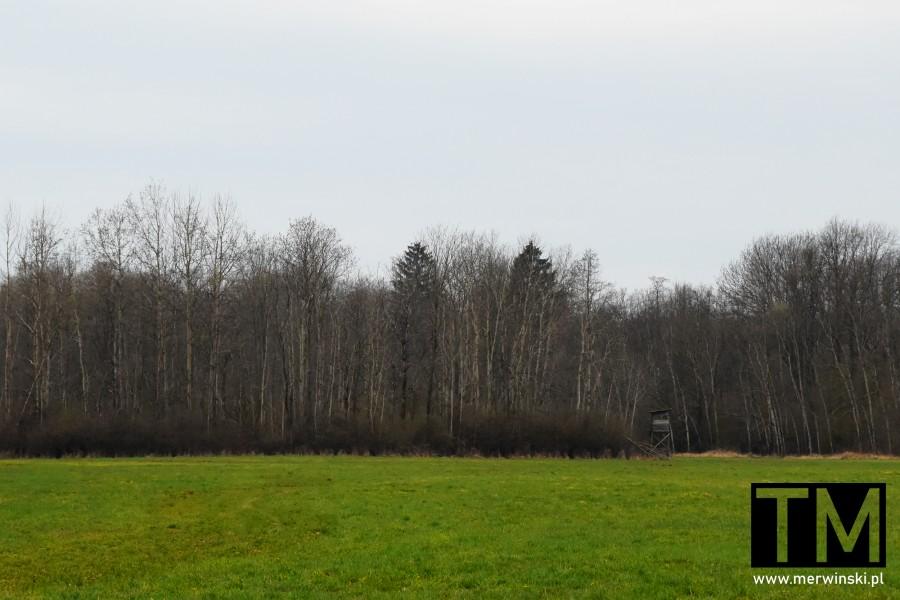 Ambona myśliwska na skraju lasu w Czerńczycach