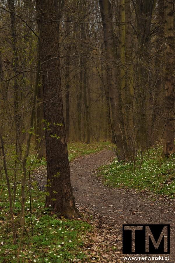 Leśna ścieżka w okolicy Czerńczyc
