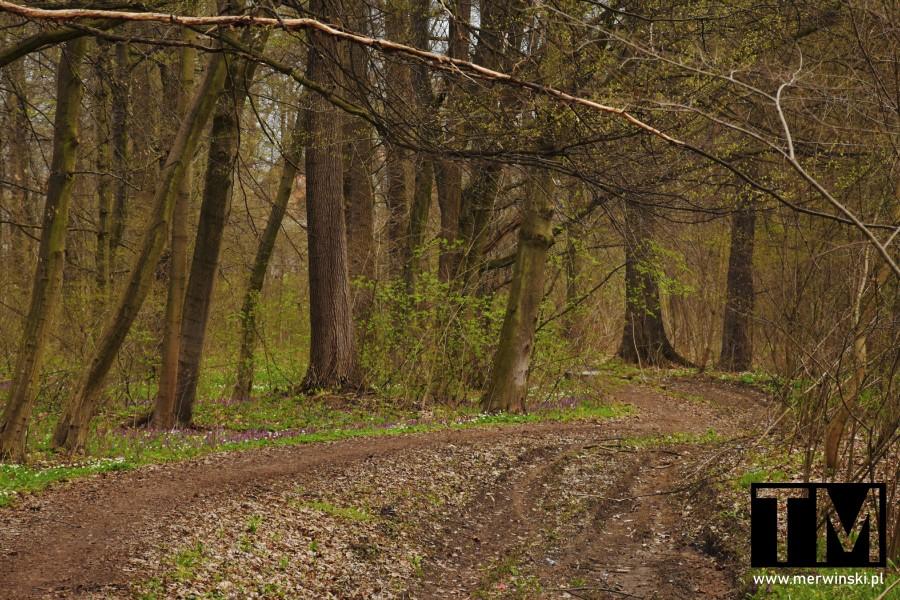 Leśna droga w okolicy Czerńczych, Dolina Bystrzycy