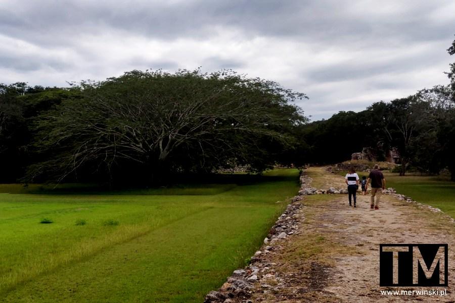 Majańska droga sacbe