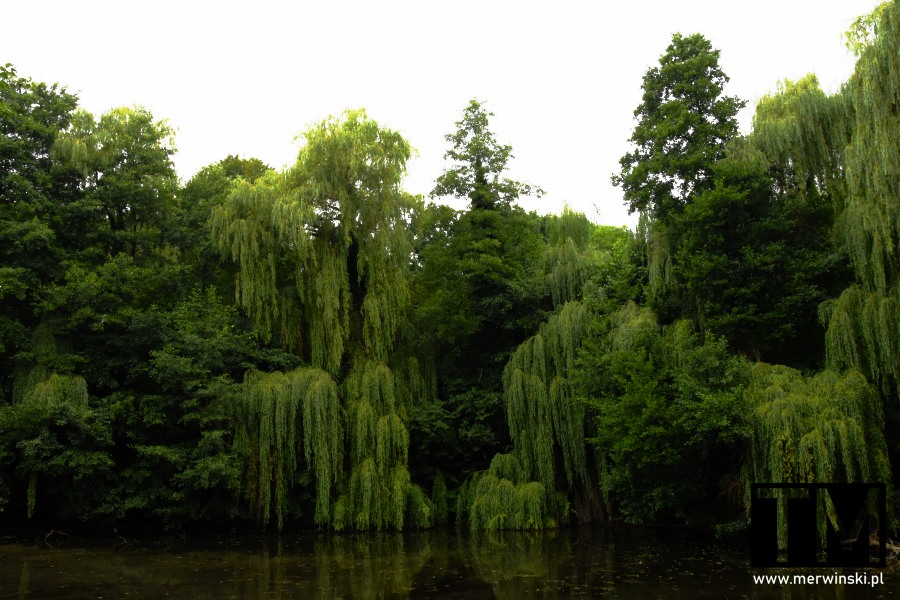 Drzewa parku przypałacowego w Szczodrem