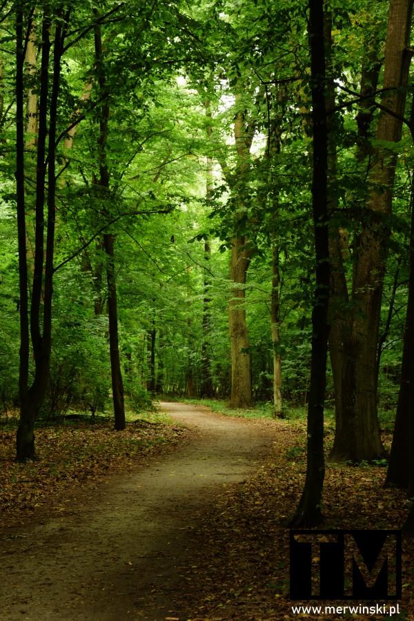 Ścieżka parkowa w Szczodrem