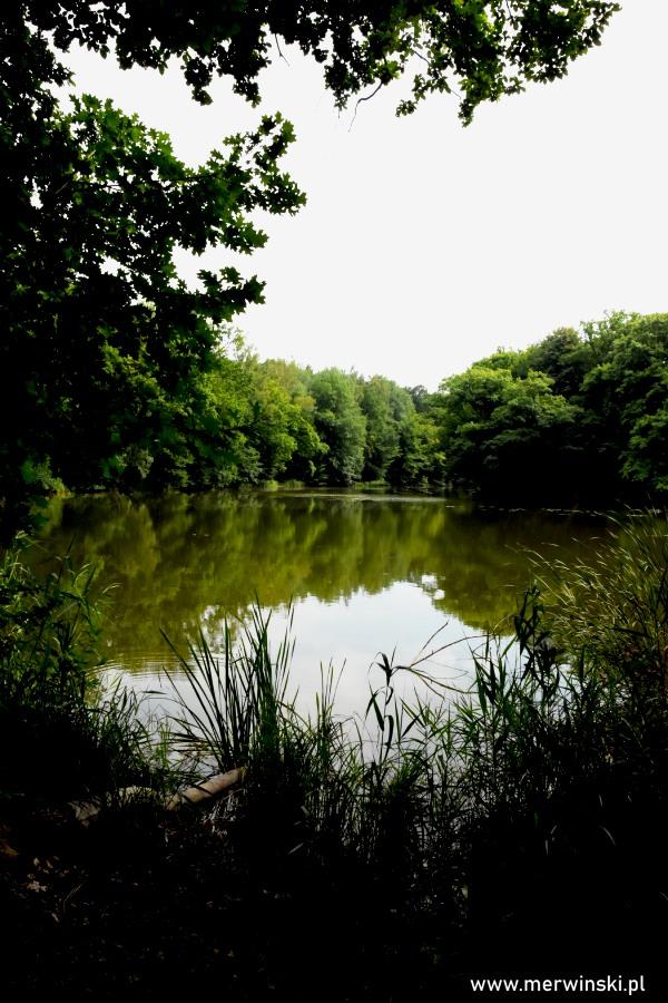 Zarośnięty brzeg stawu w Szczodrem