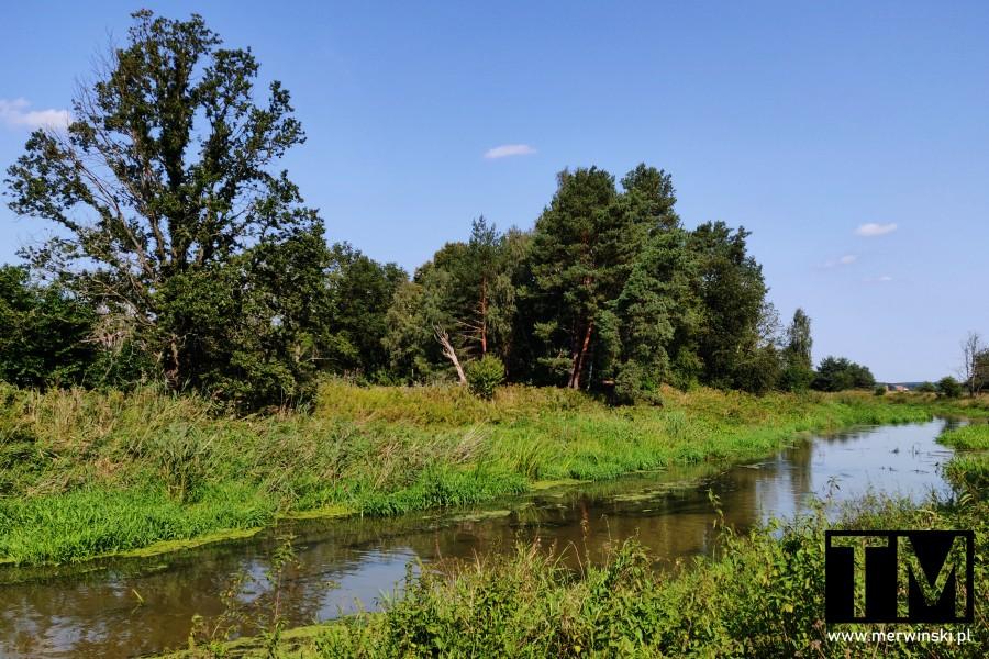 Szlak kajakowy Barycz na Dolnym Śląsku