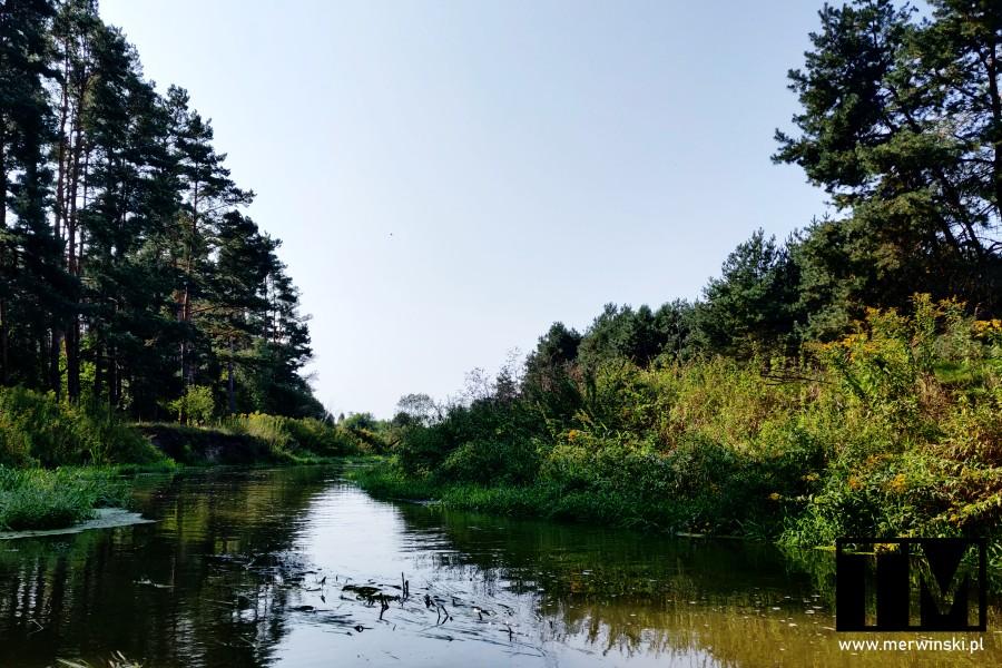 Rzeka Barycz niedaleko Milicza
