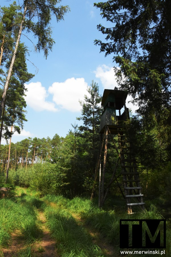 Ambona w lesie na Dolnym Śląsku