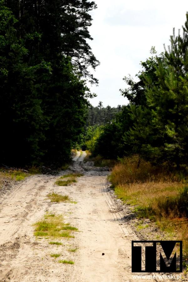 Leśna droga w okolicy Jelcza-Laskowice