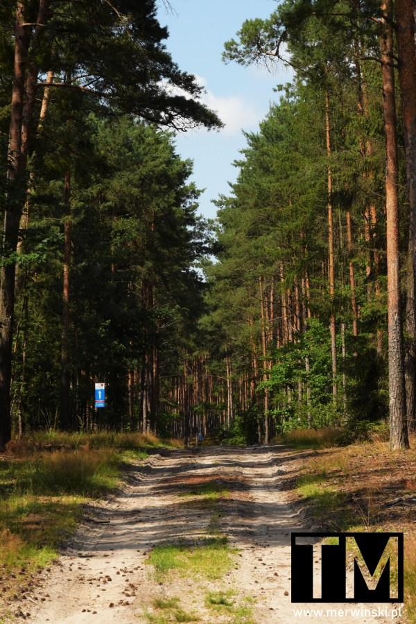 Jelcz-Laskowice - droga leśna