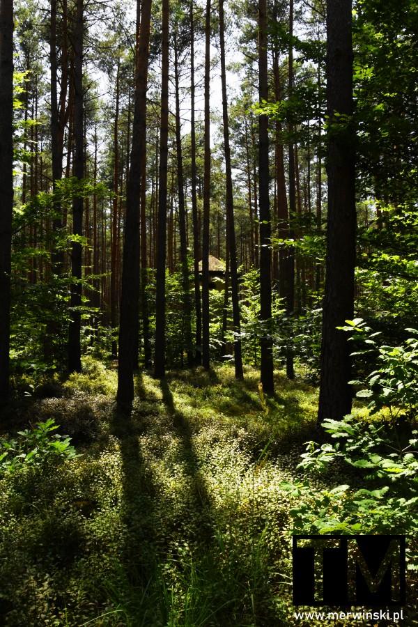 Wieża obserwacyjna w lesie na Dolnym Śląsku