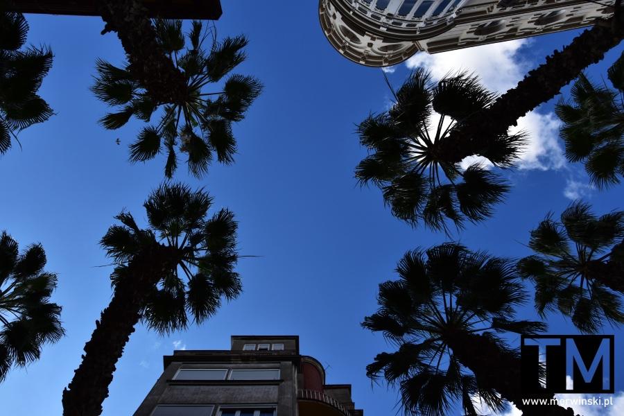 Palmy pośród zabudowań Malagi
