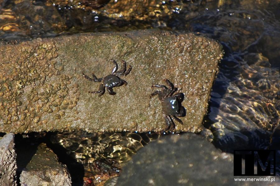 Kraby w Gwadianie w Andaluzji